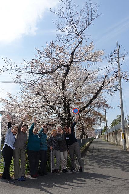 とある浄水場の桜の並木道。なかなかな穴場にご招待しました。