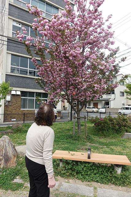 公園でも、見事な八重桜が咲いてました。