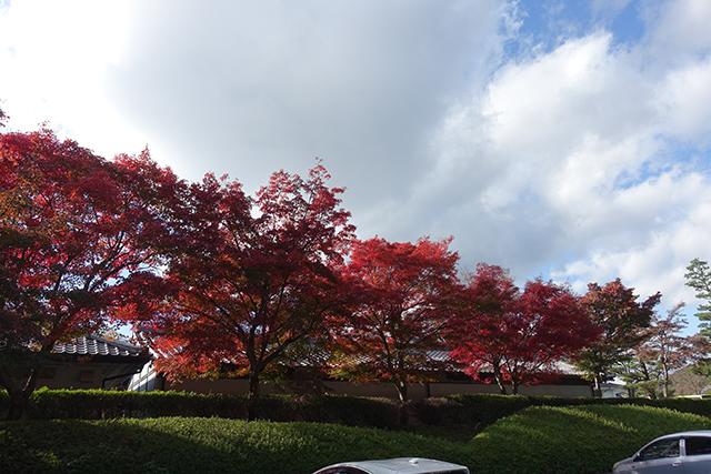 今年も鮮やかな紅葉が見られました